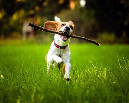 Hunde laufen frei